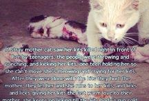 Stupid Animal Abusers