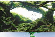 acuarios natural