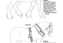 ló imádat