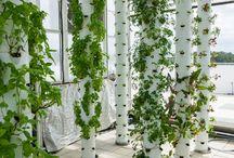 green house vegetable