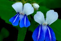 Flowers / by Beth Thompson