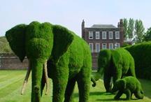 żywe pomniki ogrody