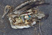 Umweltverschmutzung | LigaVogelschutz / Vögel sind vielerlei Gefahren und Bedrohungen ausgesetzt: der Verlust von Lebensraum ist das mit weitem größte Problem. Aber es ist auch unser Verhalten, das oft auch indirekt Vögel schadet.   Beim Einkauf, beim Hausbau oder im Garten haben wir es in der Hand, ob wir Vögel schützen wollen.