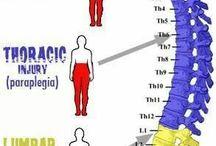 anatomi mm