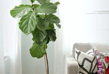 Plants&pots  decoration