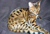 les chats de lilou / les chats