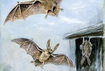 Bat art & illustrations