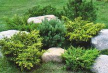 planta y jardines / diseño de jardines