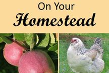Homesteading / Various homesteading tips and advice for homestead beginners or experts