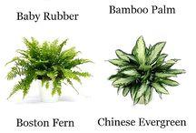 balcon et plantes