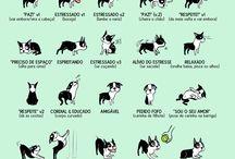 Aquipode Totó / Lugares onde pode ir com o cachorro e fotos divertidas / bacanas
