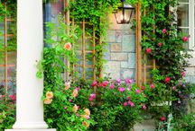 Garden and Flowers / by Mary Wollschlager