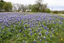 Texas Bluebonnets / by Planet Weidknecht