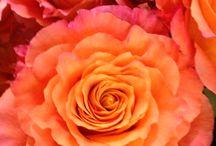 Framingham Florist-TrishaCooperDesigns.net / Beautiful Wedding Creations To Fit any budget!!!