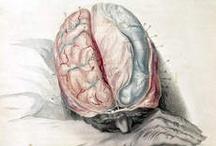 Epilepsy Info