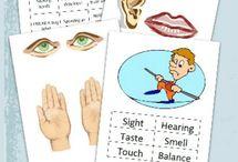 5 Senses- Homeschool