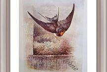 Antique Bird Prints