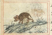 Mouse/rats in medieval