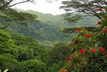 Hawaiian Forests