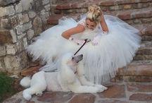 Poodle Weddings / Weddings with Standard Poodles...