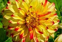 Seasonal flowers in July