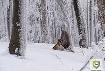 Bieszczady zimą / Zimowa wyprawa na Jawornik w Bieszczdach w towarzystwie miejscowego przewodnika.