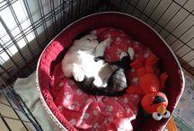 Sleeping puppys