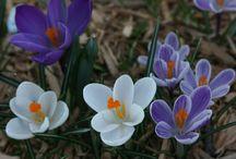 Carolina Mtn Spring Scenes