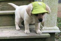 동물 옷,acc,hat