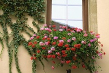 window boxes/ balconies