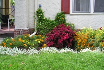 Gardening / by Nancy Tempas