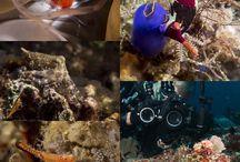 Anilao / Diving