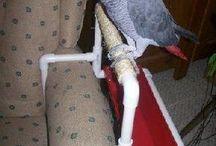 cose utili per pappagalli.