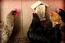 Chickens / by Dana Worstell
