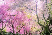 ✿⊱ Spring ✿ Summer ⊱✿ / by Anne