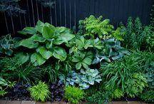 garden in a shade