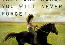 Inspiration / Inspirational quotes and pictures for horse lovers and others!