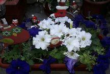 Plantas floración en otoño e invierno
