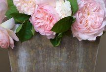 Flowers 4 All / Fresh Cut + Arrangements + Bouquets + Etc