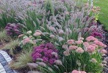 Ogród Moniki