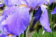 υπέροχα λουλούδια