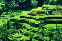 me-like Bali
