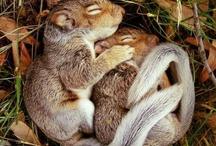 SQUIRRELS!! / by Jamie Nusso