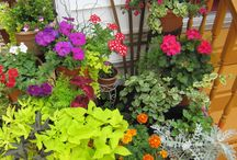 Container Gardens! / Gardening can happen in containers for apartment life!