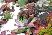 Succulent Seascapes / Using succulents to create an undersea theme landscape.