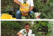 propagate fig trees