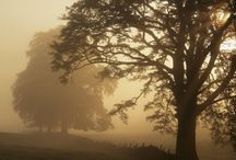Fall Thyme :) / by Jolisha Strouse
