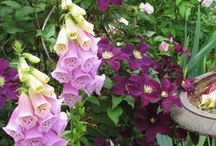 Planten Combinaties / Welke planten combineren goed? Practische voorbeelden.