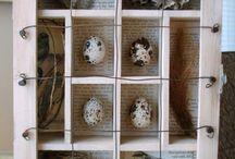 Cabinet curiosities / Cabinet of curiosities