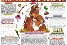 Herbs for Horses / by Chloe Cook